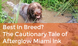 Best In Breed? The Cautionary Tale Of Afterglow Miami Ink